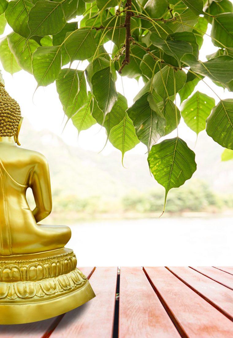 Cosa sapere sulla filosofia yoga